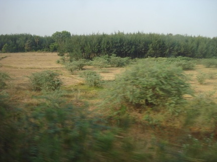 Greenery (from train)